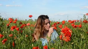 Young beautiful girl weaves a bouquet of poppies with a poppy field on a sunny summer day.  stock video
