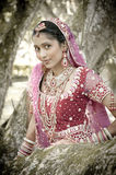 Young beautiful Indian Hindu bride standing under tree. In bridal gown Stock Photography