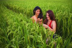 Young beautiful latin girl and her attractive red hair girlfriend both women enjoying Summer holidays together walking on rice. Field smiling happy relaxed in royalty free stock images