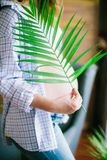 Pregnant woman with a branch of a green fern in her hands. Eco lif. Young beautiful pregnant woman in blue jeans and a light shirt. Pregnant woman with a branch Stock Photos