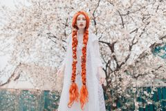 Young beautiful redhead girl with plait on spring blossom plant background. Redhead woman in white dress in garden. Blooming stock photography