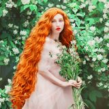 Young beautiful redhead girl with very long curly hair. Fabulous pale skin model in renaissance dress against the background of a. Blooming spring garden. Hair royalty free stock photography