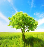 Young and beautiful tree Royalty Free Stock Photo
