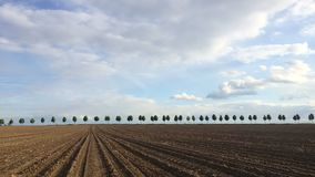 Young beautiful trees in alley with field under blue sky. Time lapse stock video footage