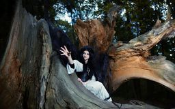 Young beautiful witch with long dark hair in root of old tree Royalty Free Stock Image