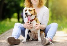 Young beautiful woman with Beagle dog Stock Images