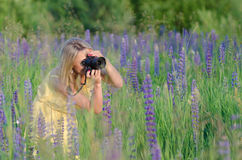 Young beautiful woman with camera in the lupine fi Royalty Free Stock Photography