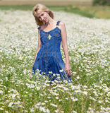 The young beautiful woman in the camomiles field Stock Photos