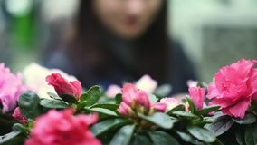Young beautiful woman chooses flowers in a flower shop. stock video