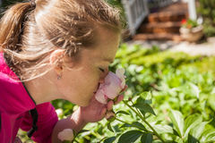 Young beautiful woman enjoying scent of a rose blooming in the g. Arden royalty free stock photo