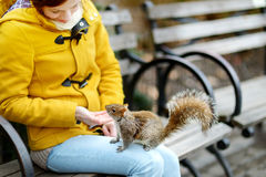 Young beautiful woman feeding a squirrel in Madison Square Park Royalty Free Stock Images