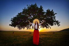 Young beautiful woman on field in summer in the sunset light Stock Photos