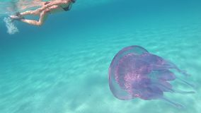 A young beautiful woman filmed in slow motion underwater swims in a transparent blue with a Rhizostoma pulmo, commonly known as ba. Rrel jellyfish, dustbin-lid stock video footage
