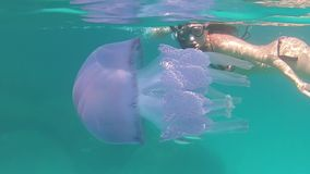 A young beautiful woman filmed in slow motion underwater swims in a transparent blue with a Rhizostoma pulmo, commonly known as. Barrel jellyfish, dustbin-lid stock video