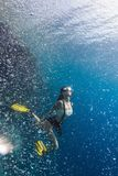 Young beautiful woman freediving in diver bubbles. Young woman freediving in a sea over vivid coral reef stock photo