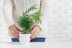 Young Beautiful Woman Holding Pot Plant stock images
