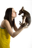 Young beautiful woman with little toy terrier dog. Young pretty beautiful woman holding little toy terrier dog. isolated on white background Royalty Free Stock Photo