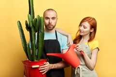 Young beautiful woman and nhandsome taking care of home plants royalty free stock photo