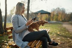 Young beautiful Woman in the park with her funny long-haired chihuahua dog. Autumn background Stock Image