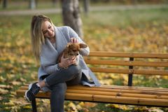 Young beautiful Woman in the park with her funny long-haired chihuahua dog. Autumn background Stock Photo