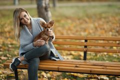 Young beautiful Woman in the park with her funny long-haired chihuahua dog. Autumn background Royalty Free Stock Photos