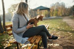 Young beautiful Woman in the park with her funny long-haired chihuahua dog. Autumn background Stock Images