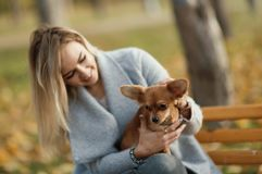 Young beautiful Woman in the park with her funny long-haired chihuahua dog. Autumn background. Young beautiful Woman in the park with her funny long-haired Stock Photography