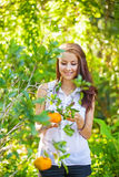 Young beautiful woman picking oranges Stock Photo