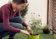 Young Beautiful Woman Planting Flowers On Her Balcony Stock Photo
