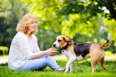 Young beautiful woman playing with Beagle dog stock photos