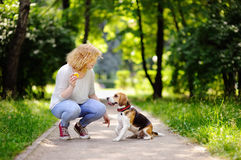 Young beautiful woman playing with Beagle dog stock image