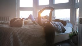 Young beautiful woman relaxing with her lovely Maine Coon cats laying in bed uses mobile phone by the window during stock video footage