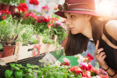 Young beautiful woman smelling flowers Royalty Free Stock Images