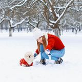 Young beautiful woman with smile walks a dog on a white snowy ba. Ckground. Happy Christmas mood Stock Image