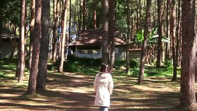 Young beautiful woman walking discovery among trees with long coat jacket in cold weather at the national pine forest park. With happiness stock video footage