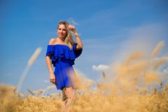 Young beautiful woman in wheat field stock photo