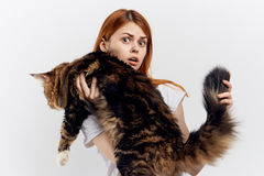 Young beautiful woman on white  background holds a cat, maine coon, pets Stock Photos