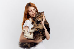 Young beautiful woman on white  background holds a cat, pets, animals, girl Royalty Free Stock Photos