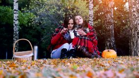 Young beautiful women sitting on picnic bundled up in a blanket drinking hot tea from thermos in autumn park. Girls rug stock video footage
