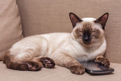 Young beautiful Young beautiful Thai cat lying on the couch and playing with a mobile phone. Royalty Free Stock Photography