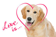 Young beautiul golden retriever dog. Sitting. Heart shape drawing. over white background. Copy space royalty free stock photography