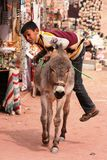 Young Bedouin boy climbing on his donkey Stock Photo
