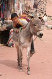 Young Bedouin boy climbing on his donkey Stock Image