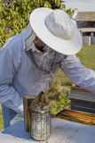 Young beekeeper. At work in garden Royalty Free Stock Photos