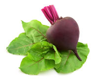 Young beet with leaves Royalty Free Stock Images