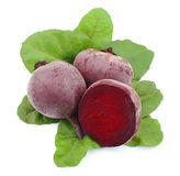 Young beet with leaves Royalty Free Stock Photography