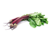 Young beetroot Royalty Free Stock Photography