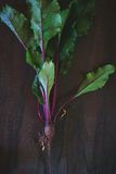 Young beetroot Stock Photo