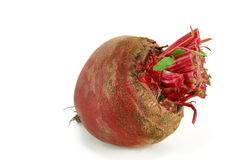 Young beets Stock Images