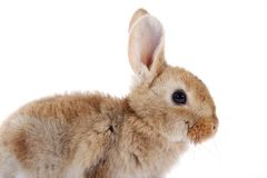 Little bunny rabbit on white background Stock Image